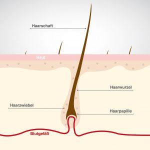 NeyHair-Haarwurzel-NeyHairTest-Haarausfall