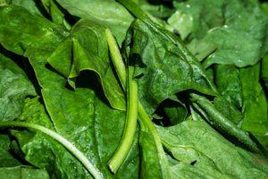 Lebensmittel für gesunde Haare Spinat